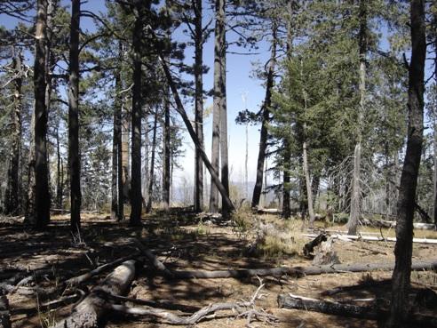 Taking Low Road >> Hiking Chiricahua Peak in Arizona