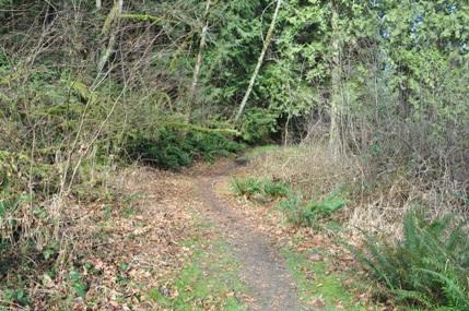 John Macdonald Tolt River Park Tolt River John Macdonald Tolt