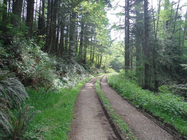 Miller Hill Lookout Site - Weyerhaeuser Vail Tree Farm